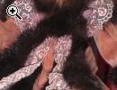 Porzellanpuppe - echtes Haar - Vorschaubild 1